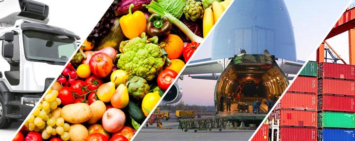Đường hàng không là phương án hữu hiệu cho xuất khẩu hàng dễ hư hỏng